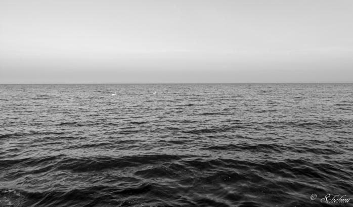 schwane-sudstrand-meer-schwarzweis-fehmarn
