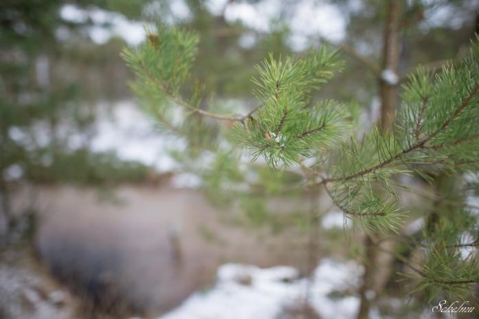 pietzmoor winter lüneburger heide 2