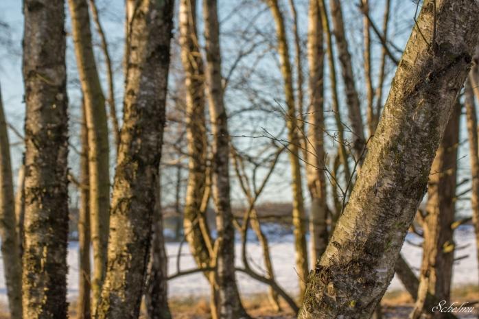 pietzmoor winter lüneburger heide 3