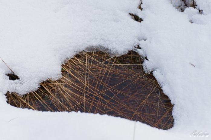 pietzmoor winter lüneburger heide 6