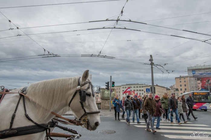 salzburg pferd