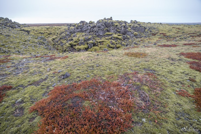 island vulkangestein landschaft moos