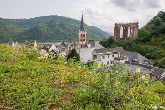 bacharach ausblick weinberg kirche st. peter