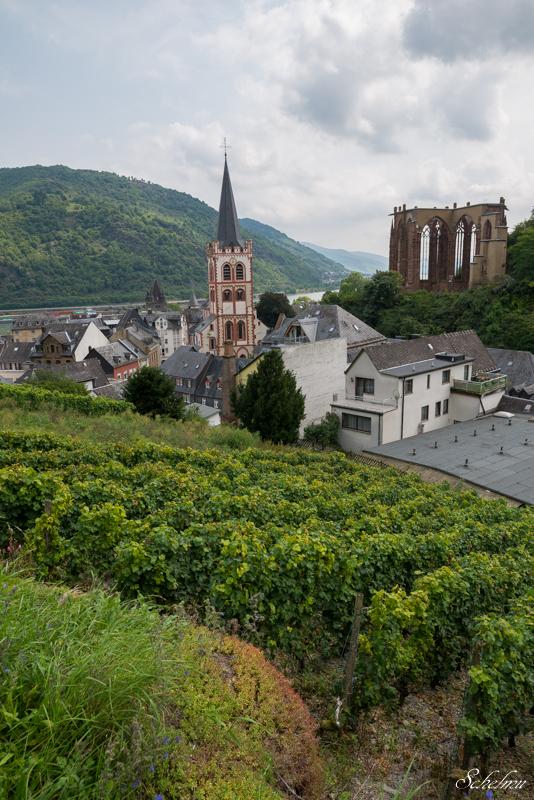 bacharach weinberg wernerkapelle ausblick wein kirche st. peter
